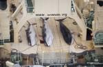 Japan keeps hunting whales - 8