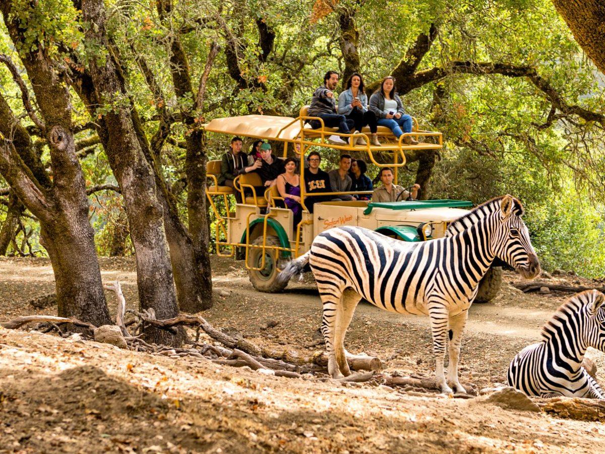 safari west jeep tour