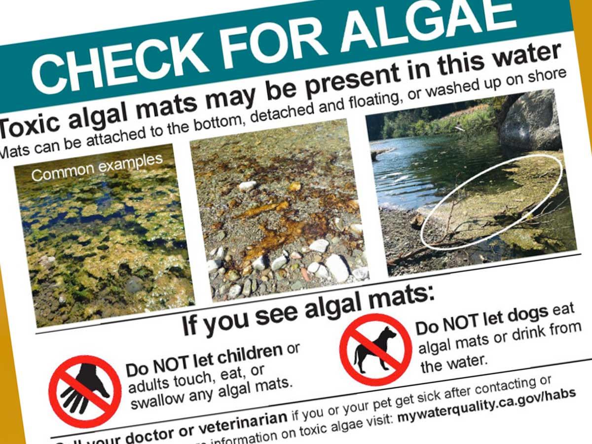 Toxic algae blooms pose public health hazard along Sonoma County waterways