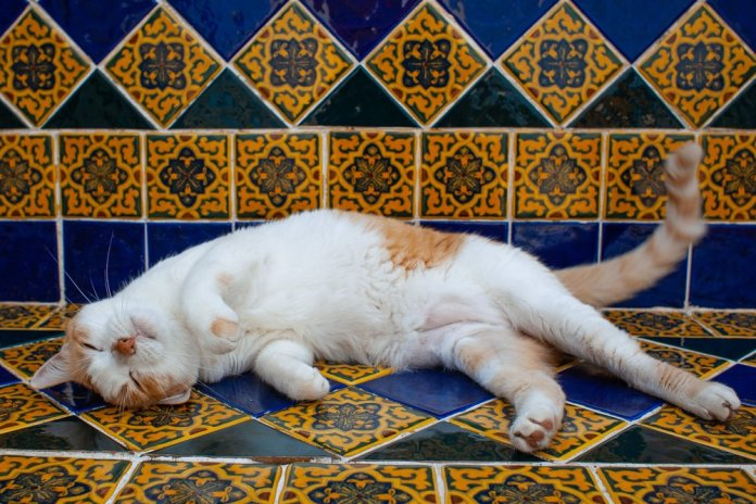 Cute cat on tile bench