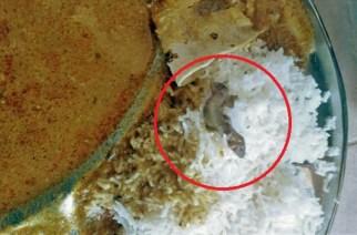 Rahul Jambhulkar found the lizard in the chicken gravy served to him
