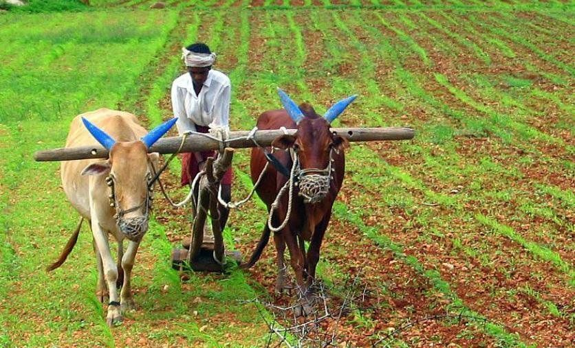 Rich farmers may get excluded from Maharashtra government's loan waiver