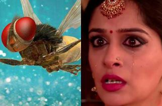 Simar to turn in to a housefly