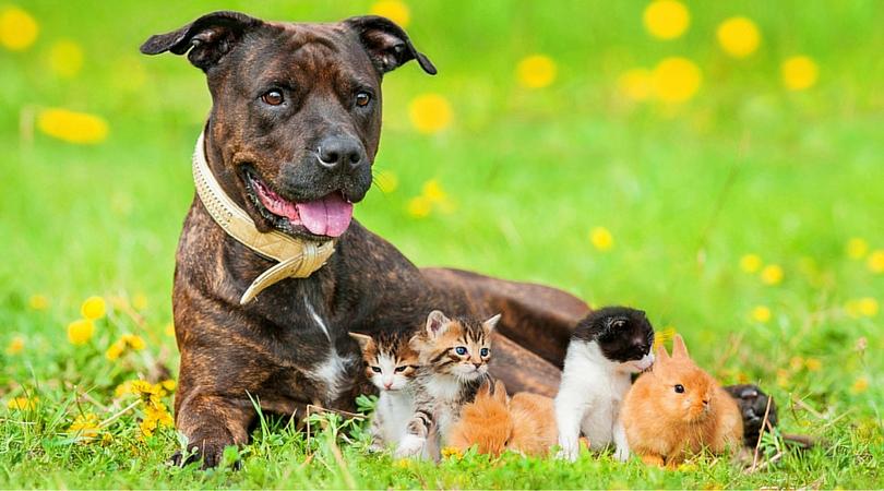 Plano Profile Magazine, Pets Contest