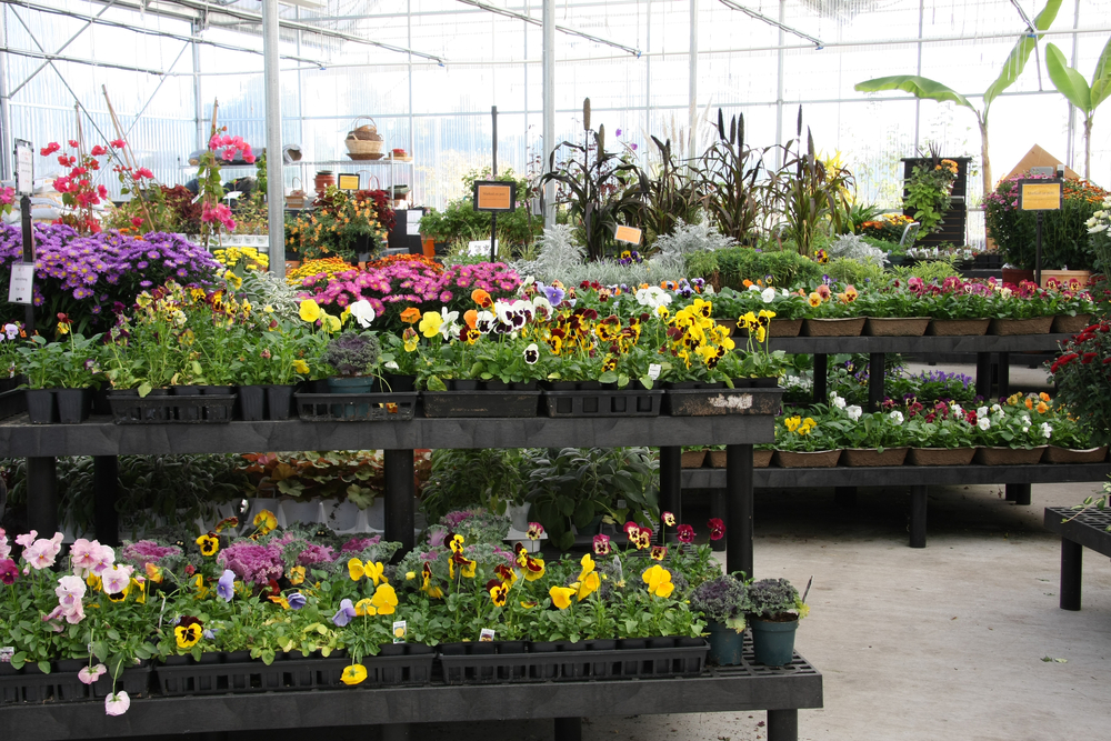 flower plant green house