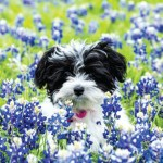 pet pageant, dogs, contest, plano pets, animal lovers, pet lovers
