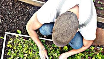 Farmers Market Whiskey Cake Plano