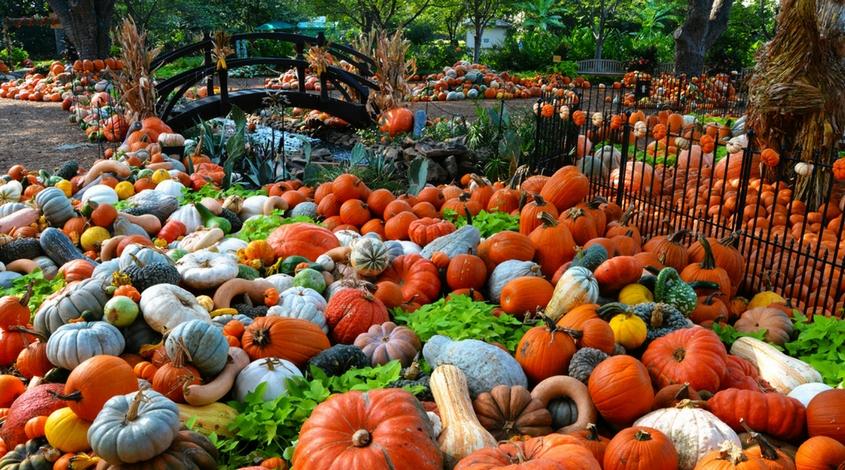 Autumn at the Arboretum Dallas