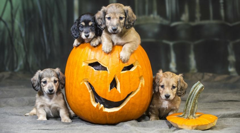 Halloween at Watters Creek