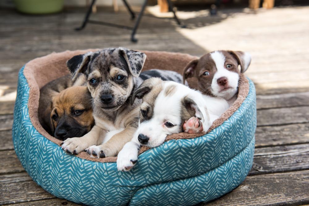 dog adoption whiskey cake plano