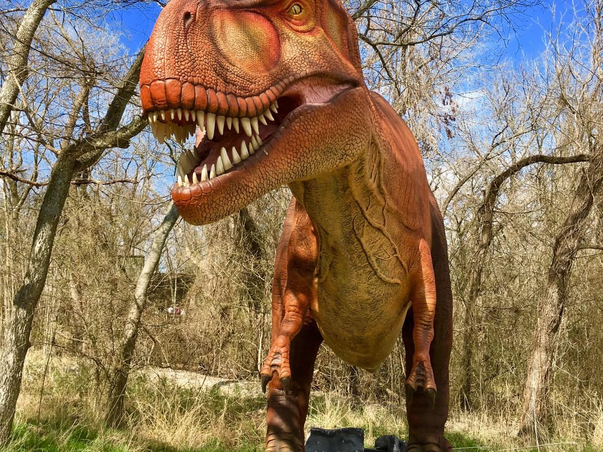 dinosaurs live heard museum mckinney