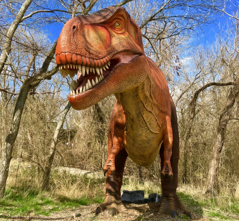 t-rex at dinosaurs live! at the heard natural science museum & sanctuary, mckinney, texas.
