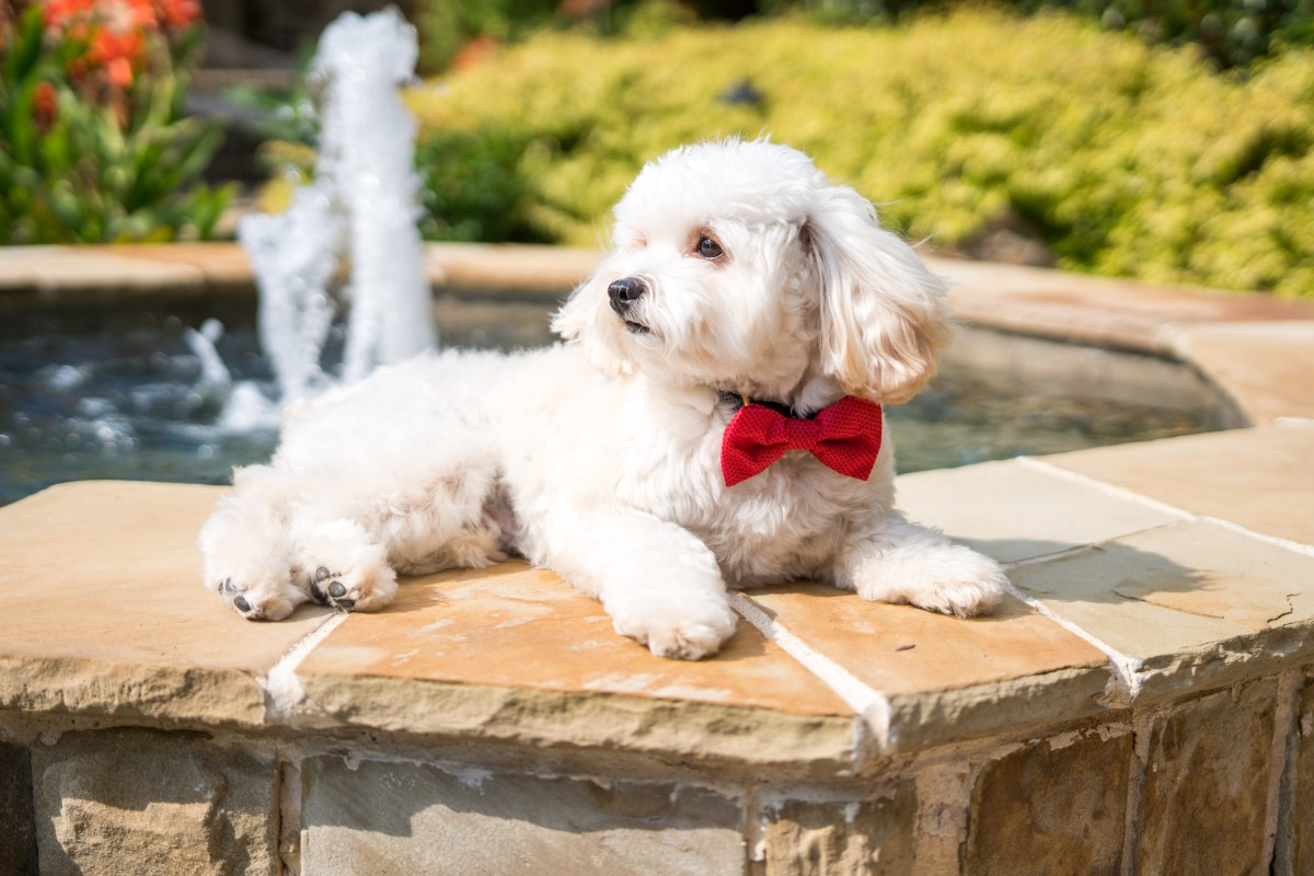 puppy-plano-pampered-fun-dog-pool