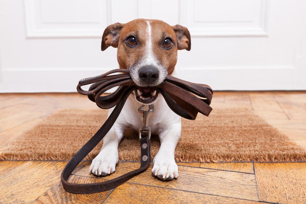 dog training downtown plano, texas