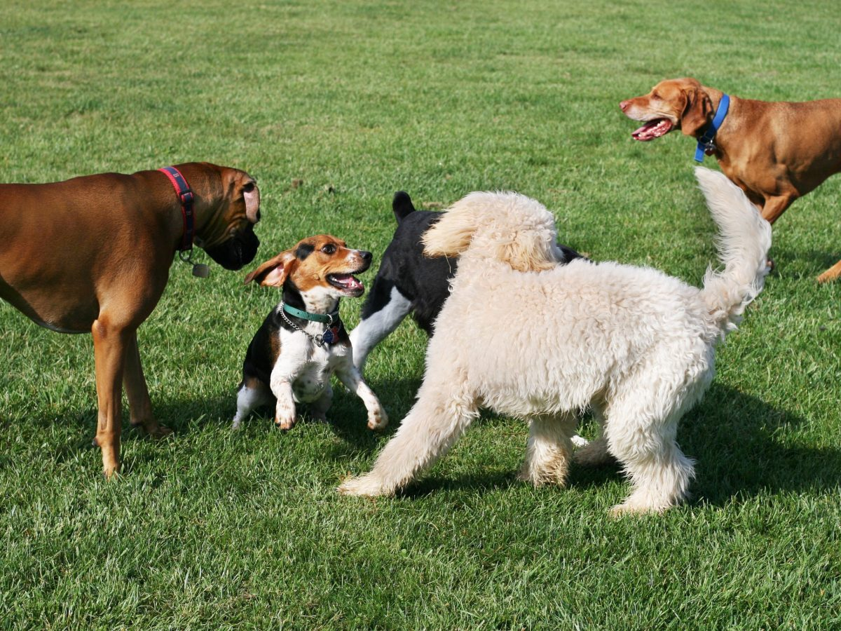 collin county dog parks