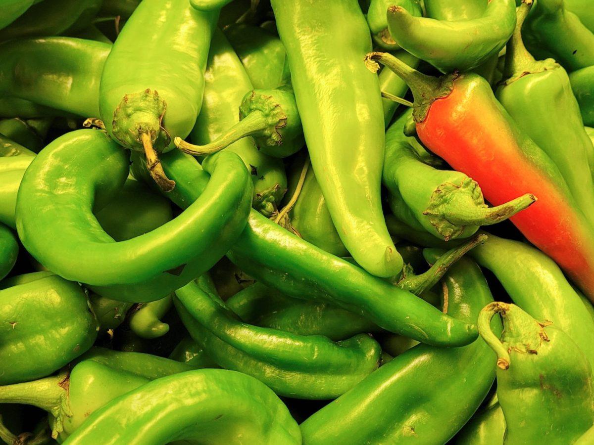 it's hatch chile season!