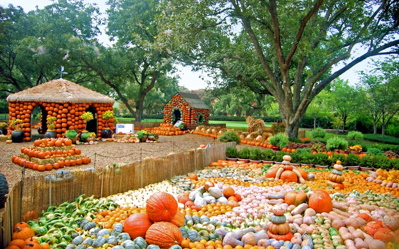 """""""autumn at the arboretum"""" is one of dallas' most beloved fall festivals!   image courtesy of the dallas arboretum website"""