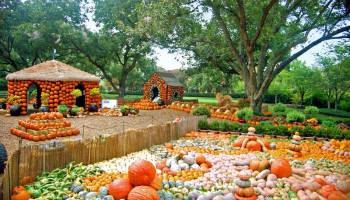 """""""Autumn at the Arboretum"""" is one of Dallas' most beloved fall festivals! 