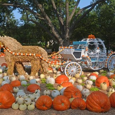 autumn at the arboretum is a perfect thing to do this weekend to celebrate the coming of october!