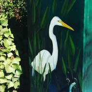 Santa Cruz Egret