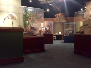 Exhibits include displays of forests, wetlands, grasslands, and more.