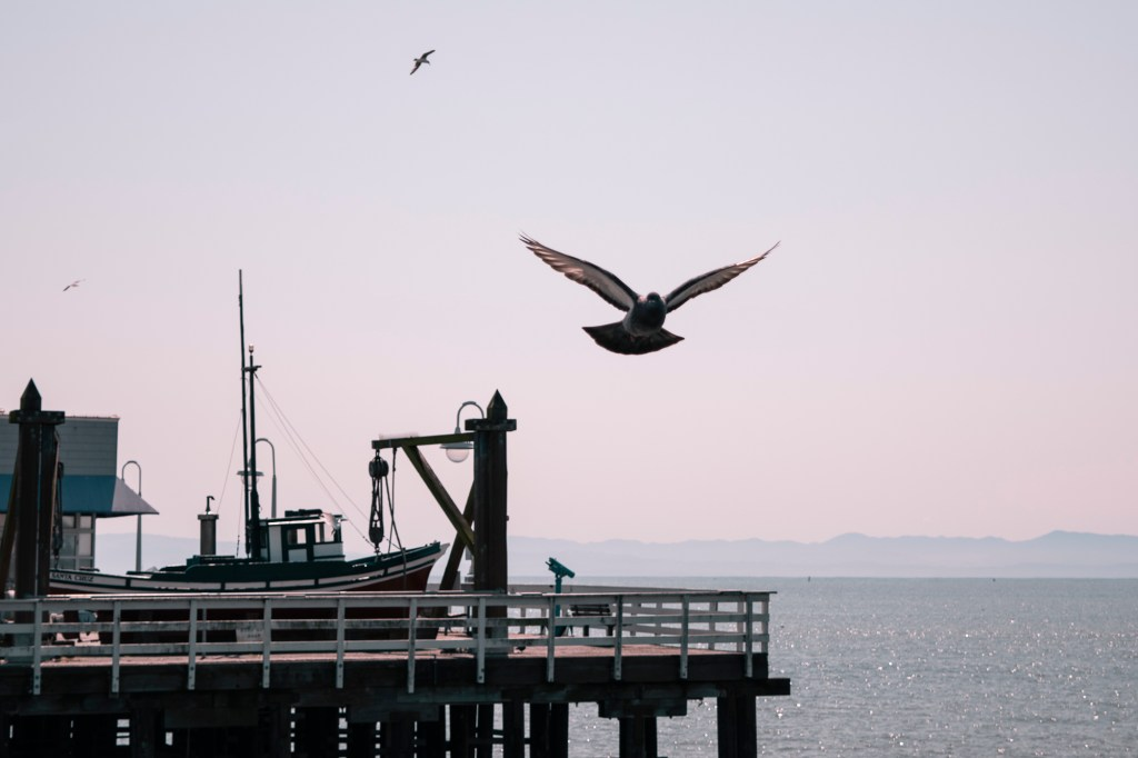 "Roxanne Corbin - ""Flight Above the Wharf"""