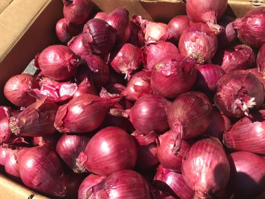 Onions at the Live Oak Farmers Market