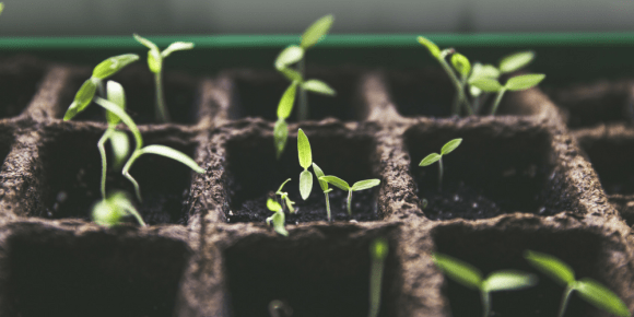 Keep Growing - 7 Ways to Get Happy, Right Now