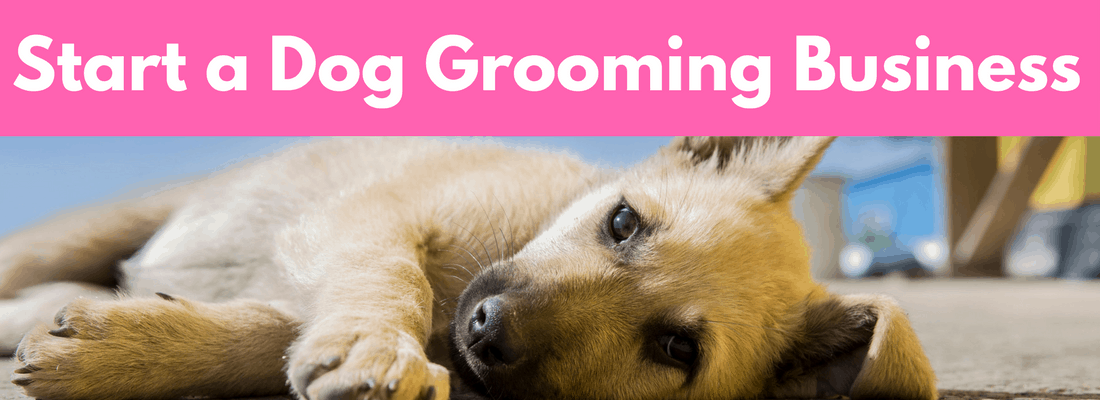 start a dog grooming business