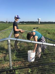 LSUHS students assisting VSU rabbit project