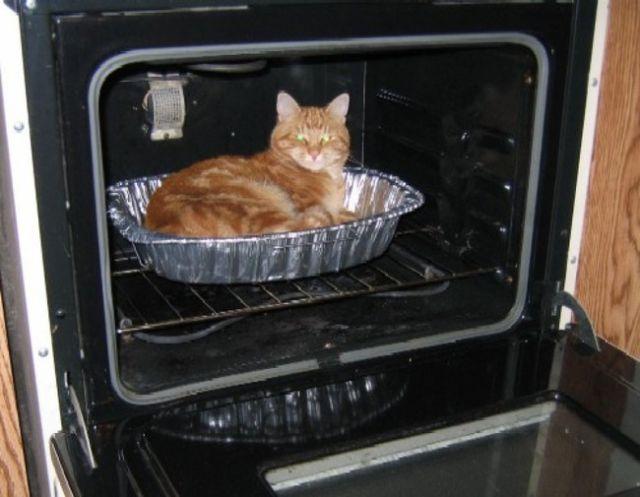 Cat-In-Strange-Place-15