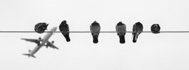 birds-1746455_960_720