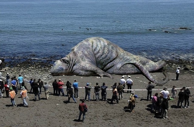 Giant-Sea-Monster-Found-on-the-Beach--114824