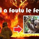 """Incendies en Australie : """"On veut savoir qui a foutu le feu? """" demande un koala en colère"""