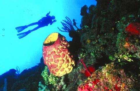 corales - Cayo Largo, Cuba