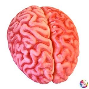 Décoration cervelle plastique