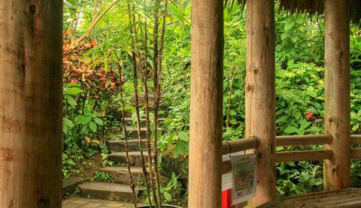 【夢の島熱帯植物館】雨でもできるフォトウォーク!いつでも南国の屋内撮影スポット!