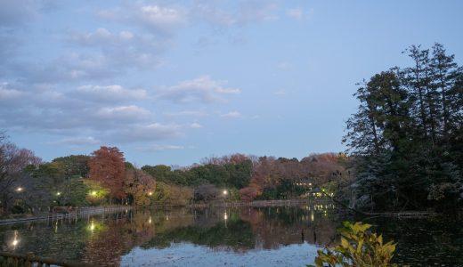 【善福寺公園】ここはカモの巣?西荻窪の隠れた野鳥撮影スポット!