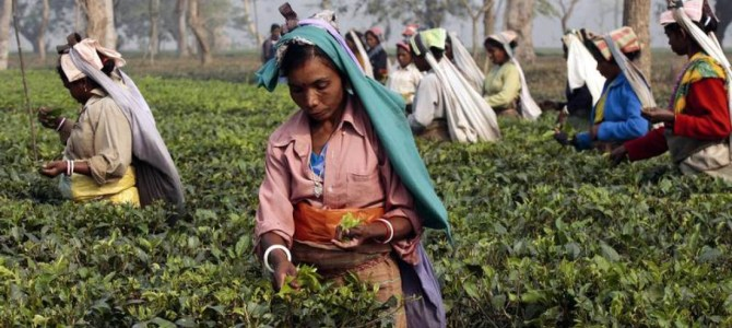 Twinings reveals suppliers amid drive for slave-free Indian tea