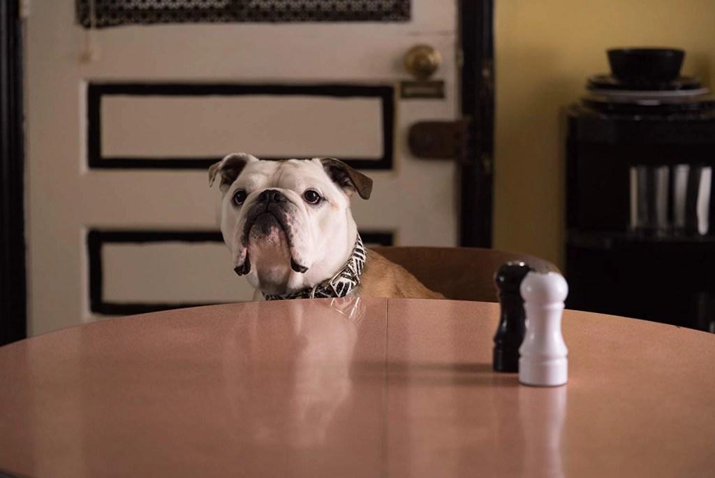 cane paterson imbronciato