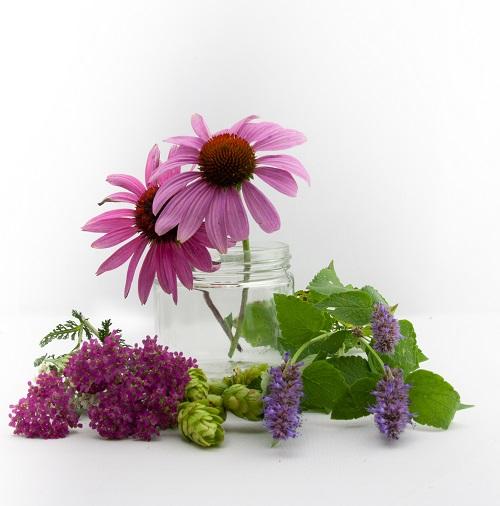 echinacea coneflower, pink yarrow, tea hops, lavender, and bergamot leaves grown at Lochland Botanicals