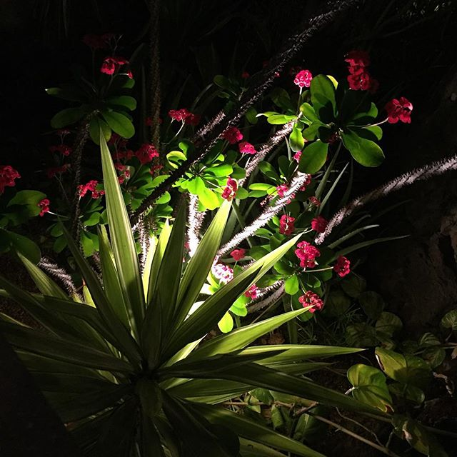 Nightlife. Gran Canaria #NoFilter #Flowers #GranCanaria