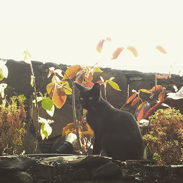 Wildlife. Gran Canaria #AtDayAllCatsAreBlack #AtNightAswell #cats #grancanaria