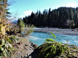The beautiful blue water of the Hoh River as it descends from glaciers on Mount Olympus.