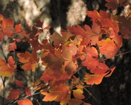 A burst of fall color along the trail