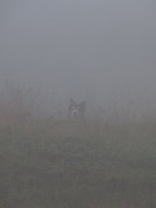 Dog in fog © Lodewijk Muns 2014