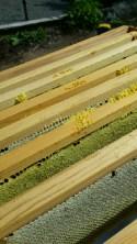honey frames in hive box2