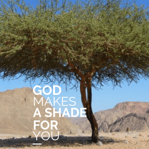 God Makes A Shade For You