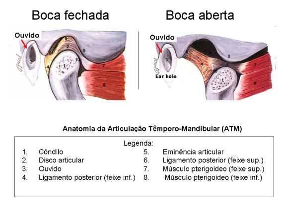 Anatomia-ATM2[1]