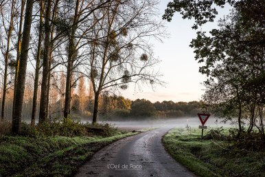 Photo #10 – Brume matinale